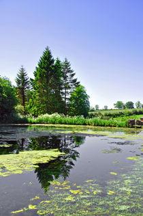Village Pond, Tissington von Rod Johnson
