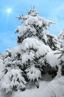 Verschneiter Baum by darlya