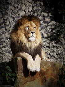 Niederländischer Löwe von Johanna Knaudt