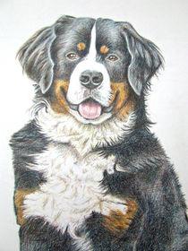 Berner Sennenhund by Nicole Zeug