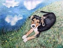 Schäferhund Welpe von Nicole Zeug