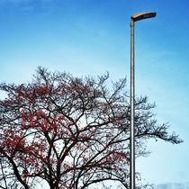 lampion von Gerald Prechtl