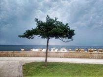 der erleuchtete Baum by Martina Lender-Frase