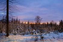 Winterstimmung von darlya