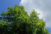 Blue sky and by leddermann