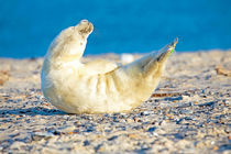 Playful baby seal on the beach by nilaya