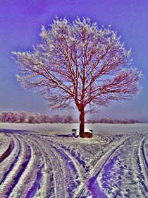 Baum by manfred richter