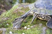 turtle II von herz +  hirn
