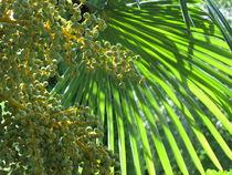 Palmwedel und Früchte von Karin Fricke