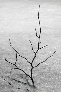 zweig im schnee by fotolos