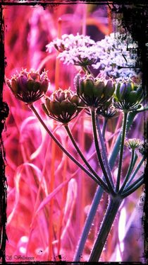 ~Romantic Sidelines Flower~ von Sandra  Vollmann
