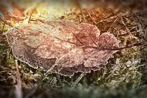 Frostiger Morgenfund von leddermann