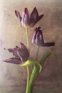 3 Tulpen by Silke Günther