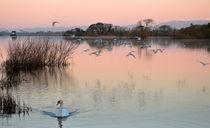 Lough Leane by Barbara Walsh