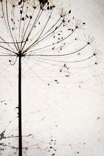 Herbstblume by Dorit Fuhg