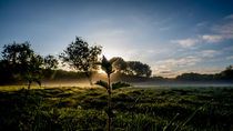 Flower in the morning  by Abe  Raats