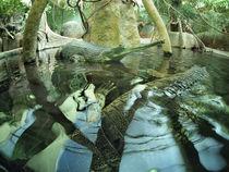 Gavialis gangeticus in zoo pond von Vladislav Romensky