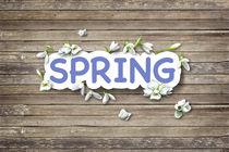 Postcard Spring by Diana Gavrylova