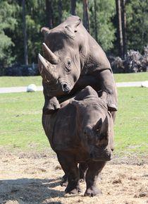 Nashörner bei der Paarung by Simone Marsig