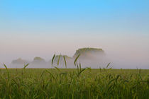 Getreidefeld vor Nebellandschaft von Bernhard Kaiser