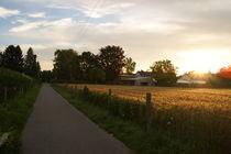 sunrise von herz +  hirn