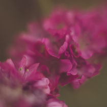 A little pink by Nadja Herrmann
