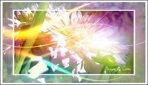 Digitaler Blumentraum 03 von bilddesign-by-gitta