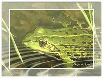 Frosch in der Welle by bilddesign-by-gitta