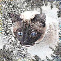 blaue Augen von Angelika  Schütgens
