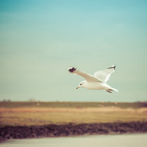 'FLYING SEAGULL' by ursfoto