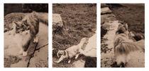 burgkatze - collage by herz +  hirn