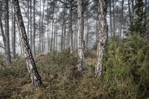 Misty Morning (Baronia de Rialb, Catalonia) by Marc Garrido Clotet