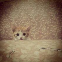 minou cute by Raphaelle St cyr