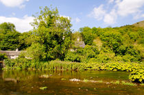 The River Wye at Upperdale von Rod Johnson