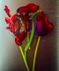 Tulpen by Silke Günther
