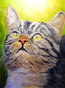 Katzenportät von Elisabeth Maier