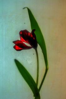 Tulpe Nr. 75 von Silke Günther