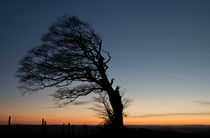 Half a tree on Raddon Top by Pete Hemington