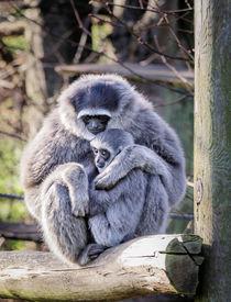 Moloch-gibbons-dot-2