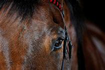 Pferdeaugen lügen nicht von cavallo-magazin
