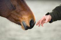 Sanfte Annäherung  von cavallo-magazin