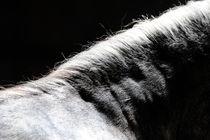 Mähne im Schattenspiel  von cavallo-magazin