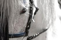 Schimmel in Anlehnung von cavallo-magazin