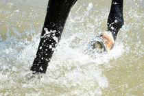 Hufe im Wasser von cavallo-magazin