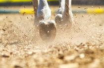 Hufspuren im Sand  von cavallo-magazin