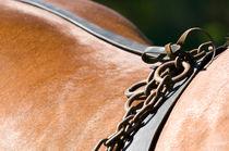 Kutschpferd in Pose von cavallo-magazin