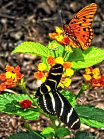 Monarch Butterfly and Zebra Butterfly von Susan Savad