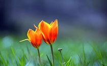 Frühlingsduett von gugigei