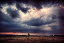 Hope Emerging by Vicki Field
