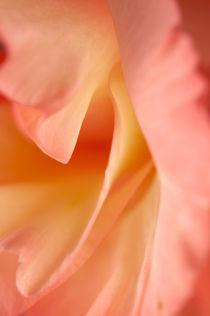 Gladiolus petals macro von Alexander Kurlovich
